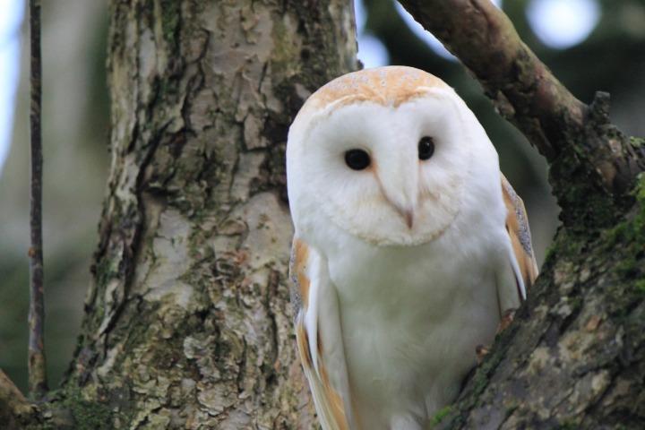 owl-3807108_1920